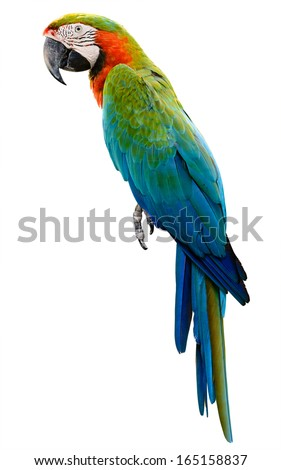 Orange green parrot macaw isolated on white background