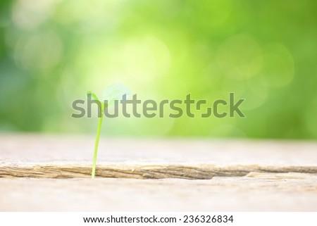 Orange growing  on wooden table  - stock photo