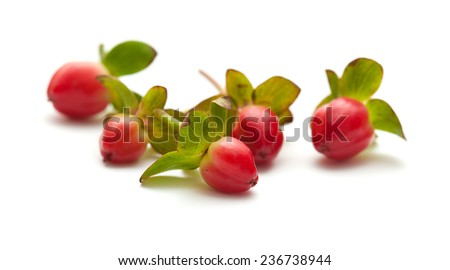 orange Hypericum berries isolated on white