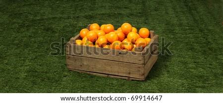 orange in box - stock photo