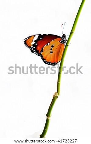 orange isolated butterfly - stock photo