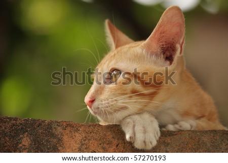 Orange kitten looking somewhere else - stock photo