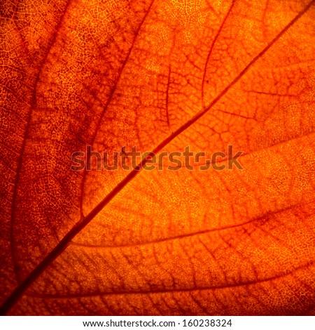 Orange Leaf  Texture Detail - stock photo