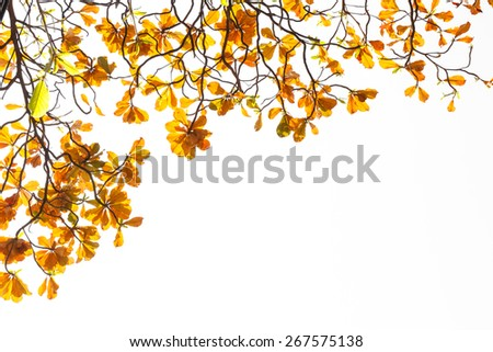 orange leaves isolated on white background