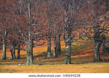 Orange leaves on the ground in autumn forest - stock photo
