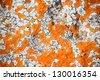 Orange lichens - stock photo