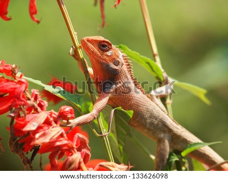 orange lizard sitting on the tree in the natural habitat. close-up photos