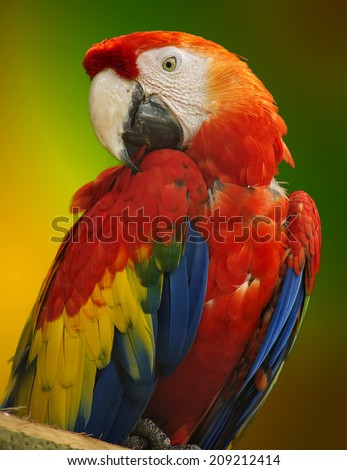 Orange macaw parrot on a colorful background.