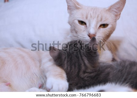 ORANGE MAMA CAT AND HER GRAY TABBY BABY