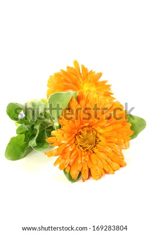 orange marigold with leaves