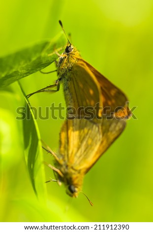 Orange pair butterfly on grass with green background blur . Shallow depth of field. Selective focus. Art - artistic macro. - stock photo
