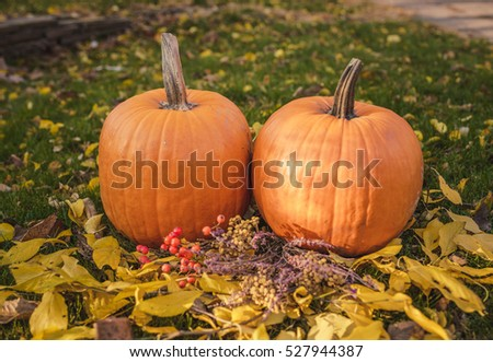 Orange pumpkin in green grass sun bright. Autumn harvest Thanksgiving or Halloween. Beautiful ripe pumpkin closeup on green lawn. Whole pumpkin image for background or banner.