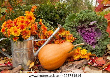 orange pumpkin, watering can with chrysanthemums and decorative cabbage in a garden in autumn - stock photo