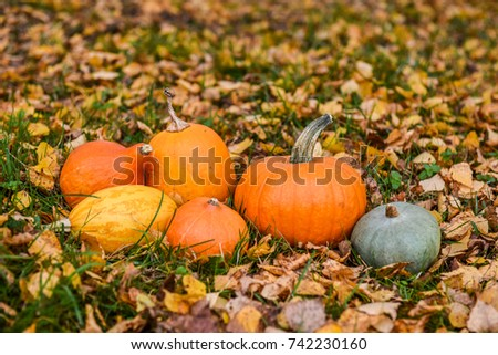 orange pumpkins against the background of autumn leaves