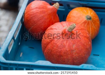 Orange pumpkins at the market - stock photo
