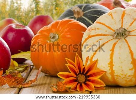Orange Pumpkins with autumn apples . Selective focus - stock photo
