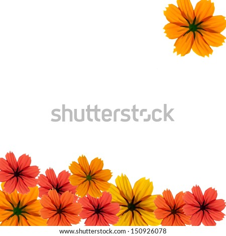 Orange, red and yellow daisy on white background