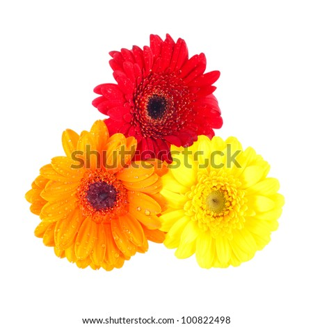 Red gerbera blossom isolated Stock Photos, Illustrations, and Vector ...