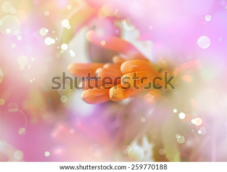 Orange Red flowers on a green background, Outdoor nature background, bouquet of spring flowers in the sunshine - stock photo