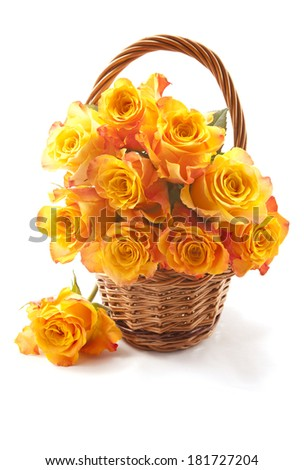Orange roses isolated on the white background  - stock photo
