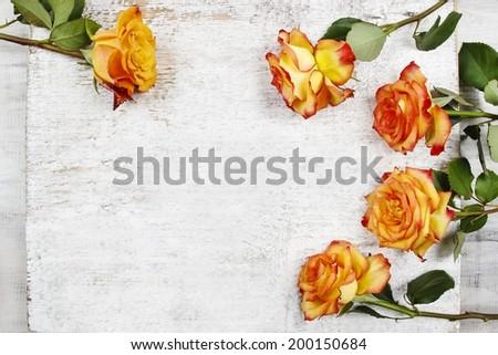 Orange roses on white wooden background - stock photo