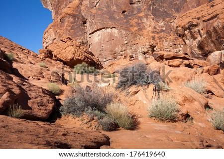 Orange Sandstone Canyon and Creosote in Desert - stock photo