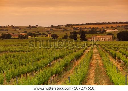 Orange Sky over Green Vineyard - stock photo