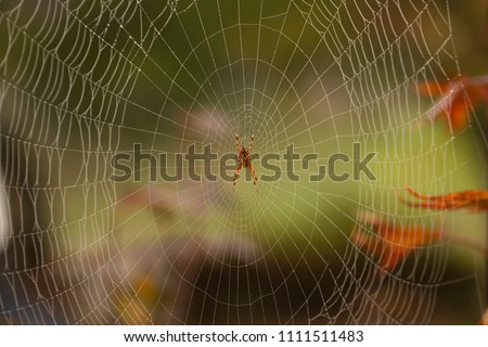 Orange spider in the center of spiderweb with leafs in the background