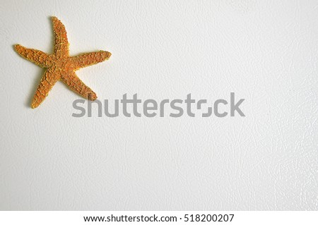 Orange Star Fish on a white background with text space