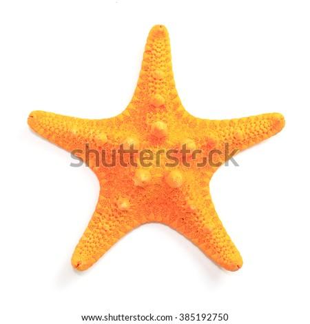Orange starfish isolated on white background. - stock photo