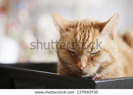 orange striped cat laying in black basket - stock photo