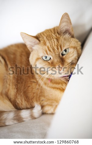 Orange Striped Cat Looking At Camera - stock photo