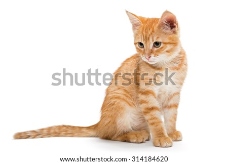 Orange, striped, little kitten isolated on white background.