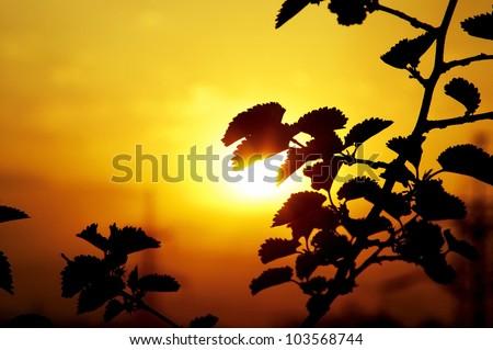 Orange sun shining through the branches - stock photo