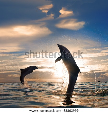 Orange sunset at the sea and two beautiful playful dolphins jumping up from water - stock photo