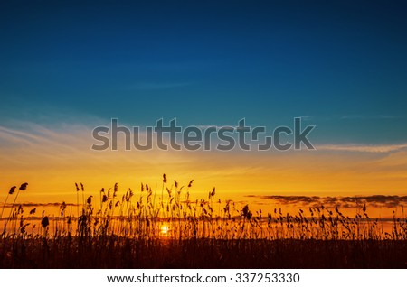 orange sunset over river with cane - stock photo
