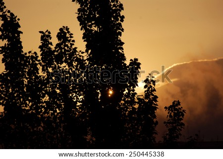 Orange sunset with tree silhouette - stock photo