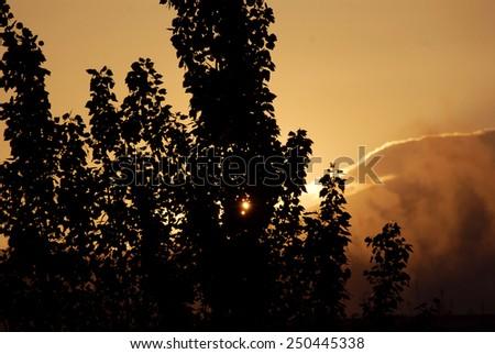 Orange sunset with tree silhouette - stock photo