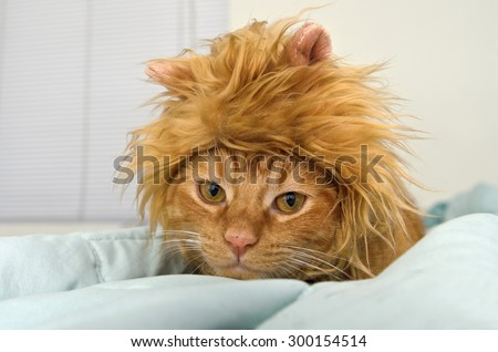 Orange tabby cat in lion head costume on bed - stock photo