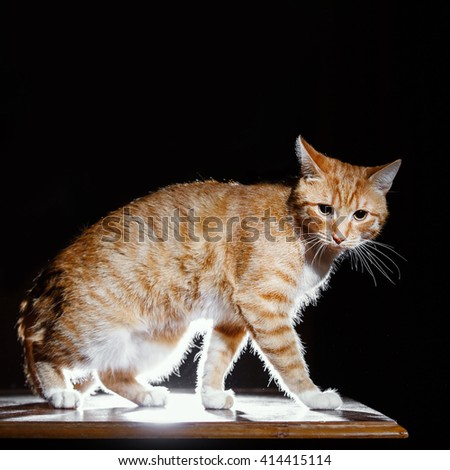 orange tabby cat, side view - stock photo