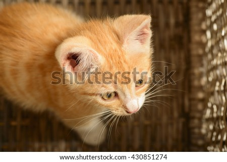 Orange tabby cat sitting in a wooden basket