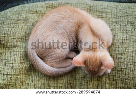 Orange tabby kitten from above. Kitten is sleeping. - stock photo