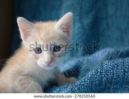 Orange tabby kitten, left side of image - stock photo