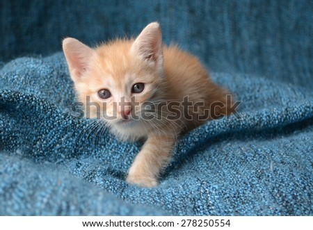 Orange tabby kitten looking up, paw out in front - stock photo