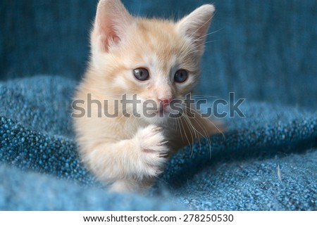 Orange tabby kitten, paw up looking to the side - stock photo