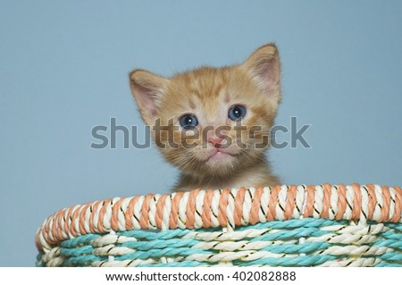 Orange tabby kitten 4 weeks old sitting in multi colored spring basket looking forward, blue textured background - stock photo