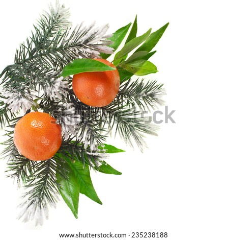 orange tangerine fruits with fir twig isolated on a white background - stock photo