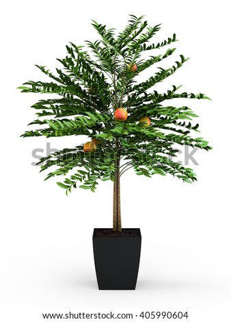 Orange tree plant in a black plastic pot isolated on white background. 3D Rendering, 3D Illustration. - stock photo