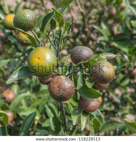 Plant Disease Stock Images, Royalty-Free Images & Vectors ...