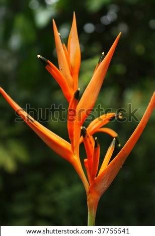 Orange tropical flower